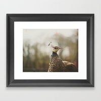 Little Miss Peahen Framed Art Print