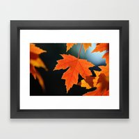 Maple leaf Framed Art Print