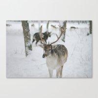 Snowy Nose Canvas Print