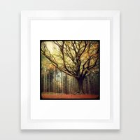 Hêtre de Ponthus 02 - Legendary Trees of Brocéliande Framed Art Print