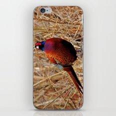 Pheasant iPhone & iPod Skin