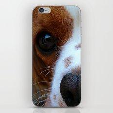 Cavalier King Charles Spaniel iPhone & iPod Skin