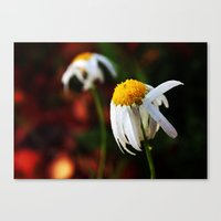 Last of summer Canvas Print