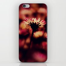 the colours of spring iPhone & iPod Skin