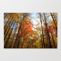 Autumn Trees Tops Canvas Print