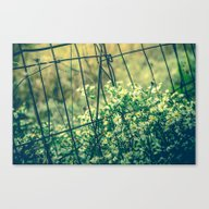 Bloom With Wild Abandon Canvas Print
