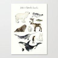 Canvas Print featuring Arctic & Antarctic Anima… by Amy Hamilton