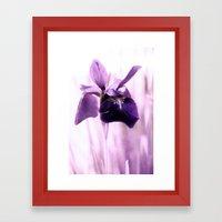 Iris Dream Framed Art Print
