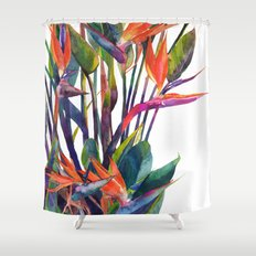 The bird of paradise Shower Curtain