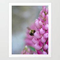 Buzzin' Round the Pink Art Print