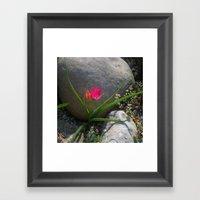Rock Garden Tulip Framed Art Print