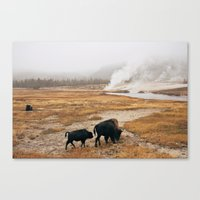 Mother Bison And Calf In… Canvas Print