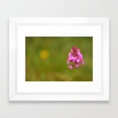 Wild Orchid 2330 Framed Art Print