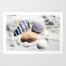 Shells in Charleston Art Print