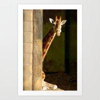Shy Giraffe Art Print