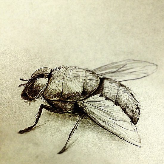Flies Art Print