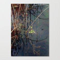 Salisbury Waters Canvas Print