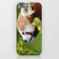 iPhone & iPod Case featuring Red Panda 1 by Stephie Butler Photography