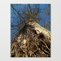 Don't Forget To Look Up Canvas Print