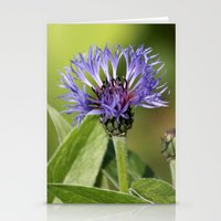 Cornflower Stationery Cards