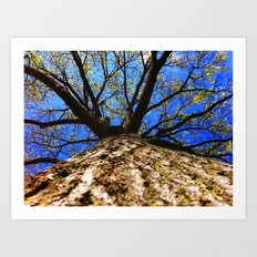 Look Up! Art Print