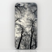 Sky-reaching Trees iPhone & iPod Skin