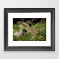 Swallowtail Butterflies Framed Art Print