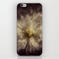 WhiteFlower Cosmos iPhone & iPod Skin