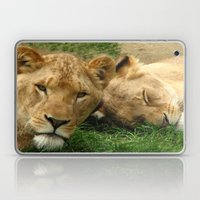 Asian Lions (Panthera leo persica) Laptop & iPad Skin
