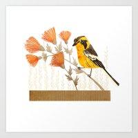 Blackburnian Warbler Art Print