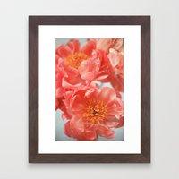 Paeonia #6 Framed Art Print