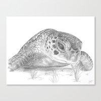 A Green Sea Turtle :: Grayscale Canvas Print