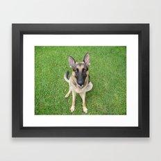A German Shepherd smile Framed Art Print