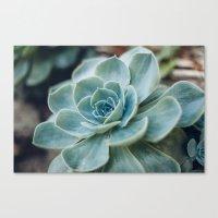 Succulent - Part I Canvas Print