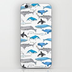Whale Constellation iPhone & iPod Skin
