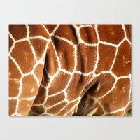 Giraffe Skin Close-up Canvas Print