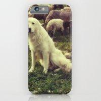 Herding dog, female, south of Israel, scaned sx-70 Polaroid iPhone 6 Slim Case