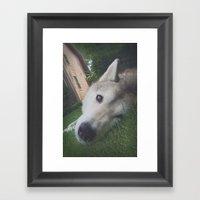 Husky 1 Framed Art Print