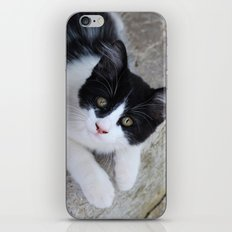 Curious iPhone & iPod Skin