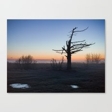 Silhouette Of Tree Before Dawn Canvas Print