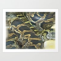 Golden Boa Art Print