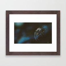 Spider Creeper Framed Art Print