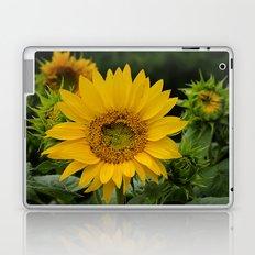 September Sunflower Laptop & iPad Skin