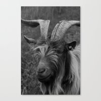 Billy-Goat No.2 Canvas Print