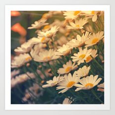 White daisy sunrise effect Art Print