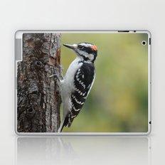Male Hairy Woodpecker Laptop & iPad Skin