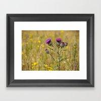 Thistle 5155 Framed Art Print