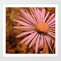 Art Print featuring Pink as a Petal by morningowl