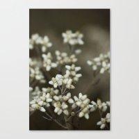 little white flowers. Canvas Print