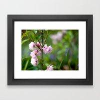 Flowering Almond Blossoms II Framed Art Print